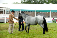 New Forest Show. Tuesday 2013  -13