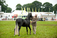 New Forest Show. Tuesday 2013  -7